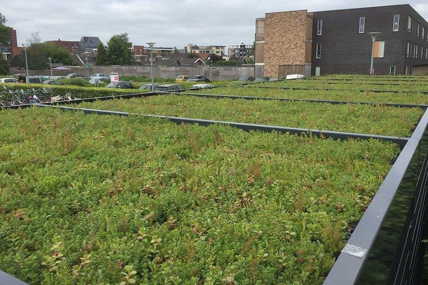 sedum cycle shelter roof